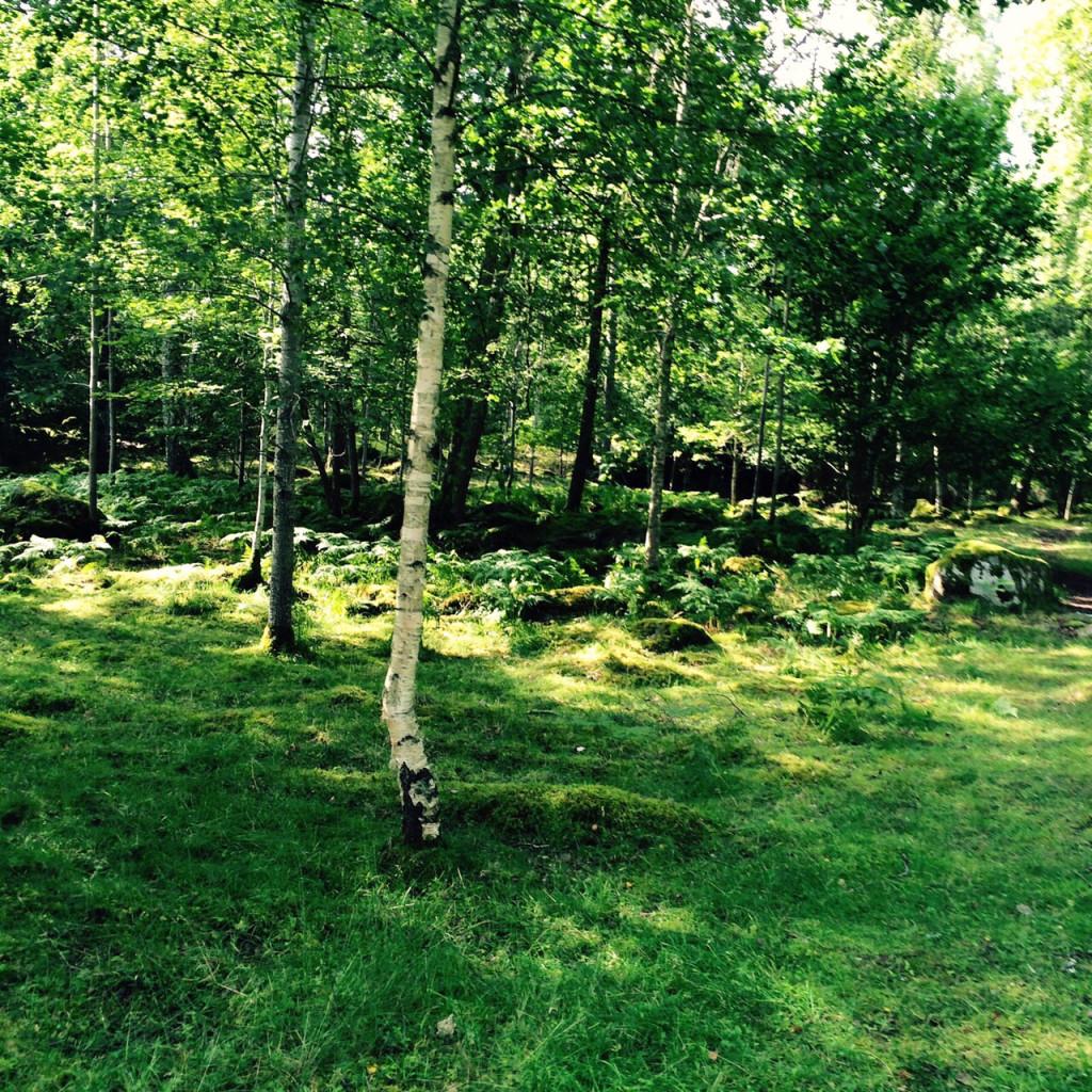 Der schwedische Wald