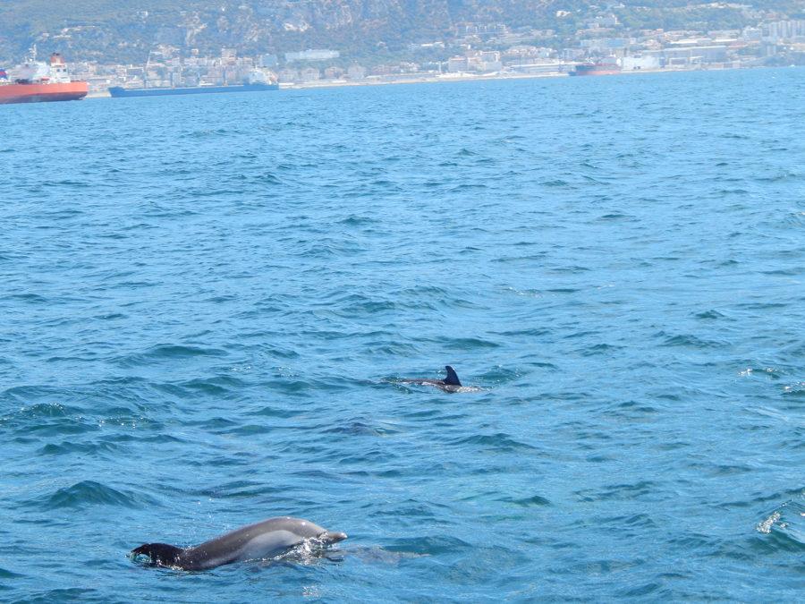 Gibraltar Kurzreise - Delfinsichtung