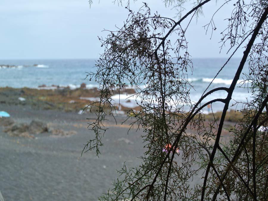 Puerto de la Cruz Tipps - Playa Jardin