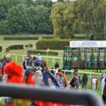 Pferderennen - Startbox