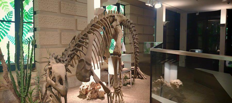 Instawalk Landesmuseum Hannover - Plateosaurus